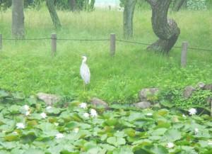 鳥とスイレン