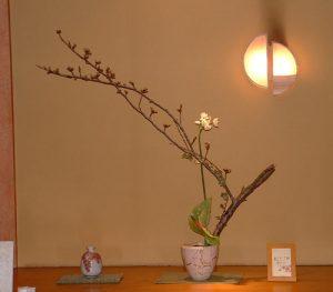 オオーニソガラムと桜のアレンジ
