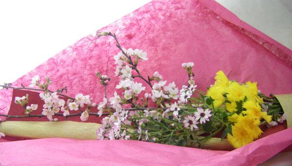 桜とイエローサルタンの花束