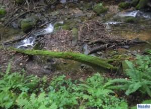 幻の滝への道