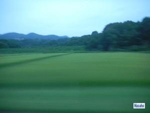 福島の田園
