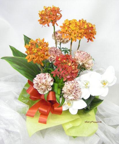 カーネーションと蘭のお祝いのアレンジ