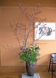 吉野桜の生け込み