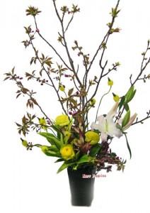 八重桜とブルビネラ
