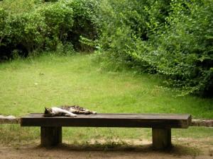 甲山森林公園の猫
