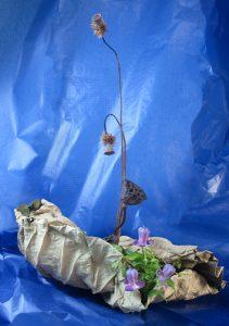 蓮の実と蓮の葉
